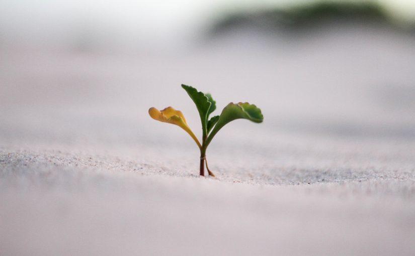 【投資方針】「成長機会」より「安定した経営・政情」